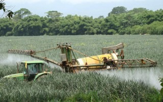 "Foto extraída de nota de la organización Swedwatch, titulada ""Toxic pesticides on Costa Ricas plantations"", 2013"